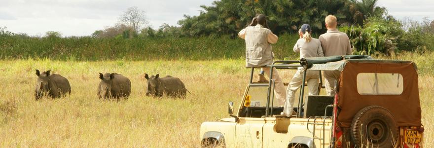 une expérience safari