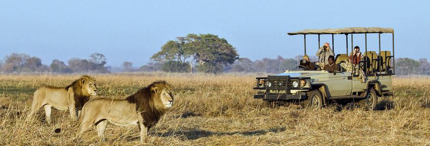 safari sur mesure