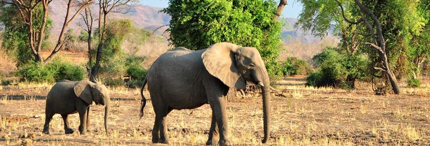 le Parc National du Sud Luangwa