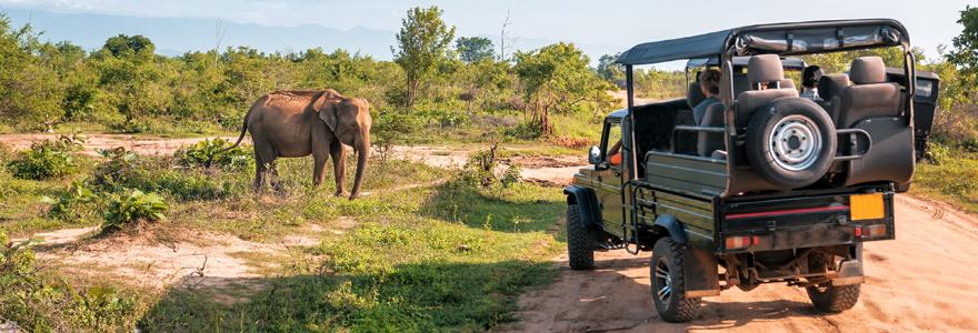 Planifier son voyage safari de luxe
